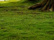 domki szczawnica